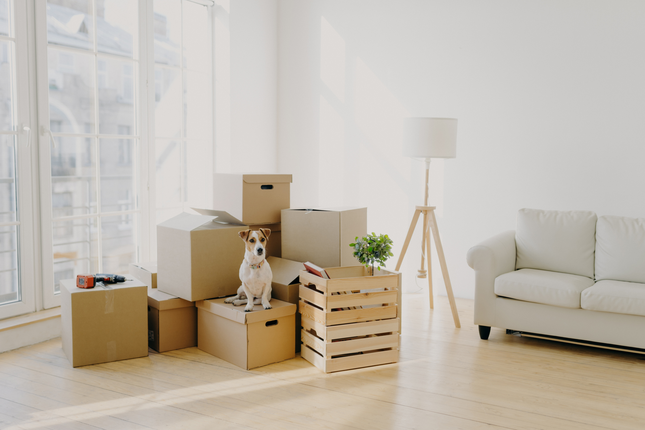 Where to Get Moving Boxes: 4 Budget-Friendly Ideas